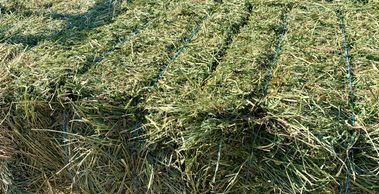 70 pound alfalfa bales for sale.