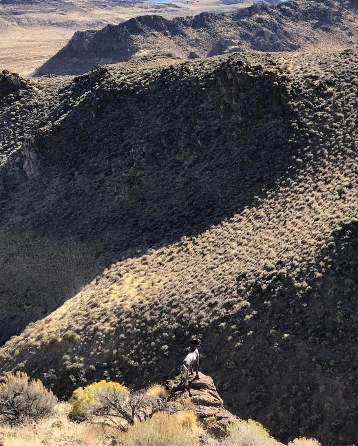 Upland Bird Hunting in Nevada