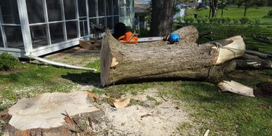Complete tree removal service