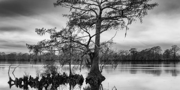 Stillness at Dusk, Waccamaw River, SC