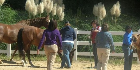 School counselors experience equine assisteed learning