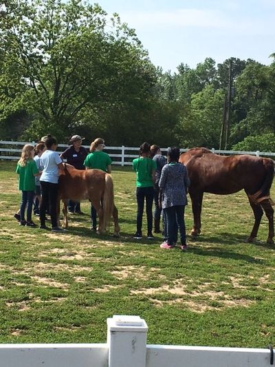 Equine assisted learning group