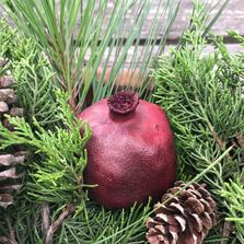 Pomegranates for decorating and crafting, whole, dried, color-enhanced