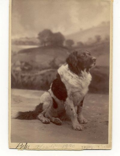 Woodie, a Denver Fire Department dog, c. 1884