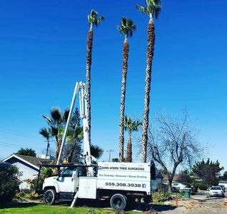 Ayers tree service . Ezra Ayers , palm tree trimming