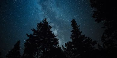 Stars in the night sky with trees