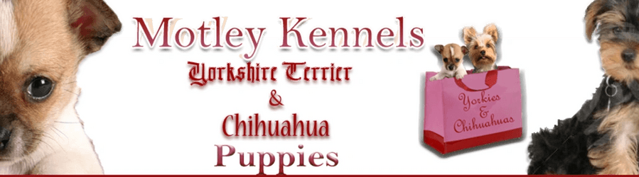 Motley Kennels