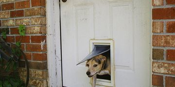 Pet Doors in Silver Spring, Doors and Windows in Silver Spring