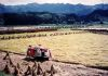 Rice Harvest/Ibaraki-ken - Appeared in The Japan Times