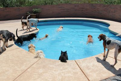 Pool play time at our Tucson Adventure Dog Ranch dog boarding service!