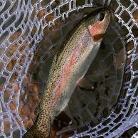 Rainbow Trout Fishing Guide Colorado Fishing Guide Fishing Guide Service Northern Colorado Fishing
