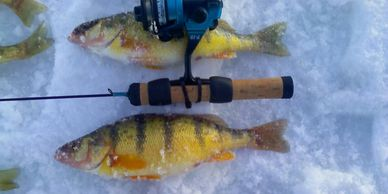 Colorado Yellow Perch Fishing Guide Service Northern Colorado Fort Collins Loveland Guide NoCo Fish