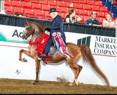 Champion, Canadian Nationals, ROL Fire Lily, Dennis Wigren