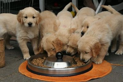 Choosing the right dog feeder for your furball!