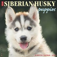 Gifts for the Siberian Husky lover.  Beautifully photographed Siberian Husky calendar. Unique dog gi