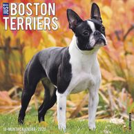 Gifts for the Boston Terrier lover.  Beautifully photographed Boston Terrier calendar. Unique dog gi