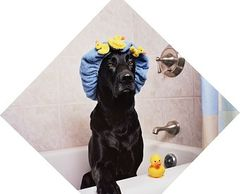 Tips on choosing dog shampoo and conditioners.  Find the best options for your dog shampoo.