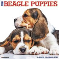 Beagle puppy calendar.  Gifts for the Beagle Lover.  Discounted gifts for the dog lover.