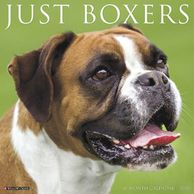 Gifts for the Boxer lover.  Beautifully photographed Boxer calendar. Unique dog gifts.