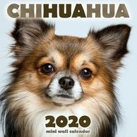 Chihuahua calendar.  Gifts for the Chihuahua lover.  Discounted gifts for the dog lover.