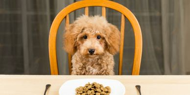 Dry Dog Food Myths.  Not all ingredients listed in dry dog food is made in the USA.