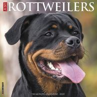 Gifts for the Rottweiler lover.  Beautifully photographed Rottweiler calendar. Unique dog gifts.