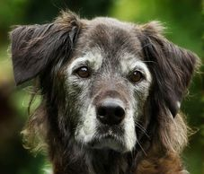Many pet parents struggle with the realization that their dog is getting older.