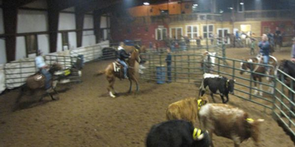 Team Cattle Sorting is a fun sport where a team of two riders on horseback bring numbered cattle fro