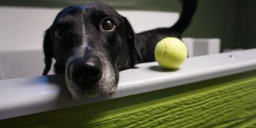 Woofs dog bakery pet supplies pet wash self service pet wash solutioingenieria Images