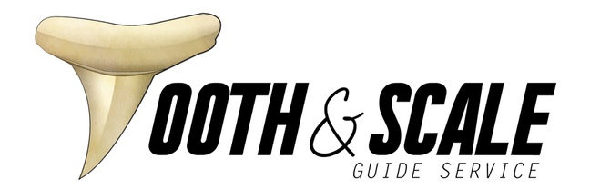 Tooth and Scale Guide Service LLC