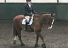 Noirin and her lovely horse competing in Jacket, Jods,  girth & reins bought from Tack'n'Togs