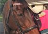 Beautiful Quello modelling yet another bling browband bought from Tack'n'Togs