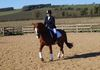 Katie and Troy in his Tack'n'Togs black with white padding flash bridle.