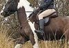 Siobhan Timlin and her gorgeous cob out huntin in the Tack'nTogs' Ergonomic comfort bridle