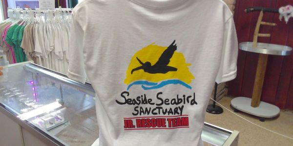Gift Shop at the Seaside Seabird Sanctuary in Indian Shores, Florida.