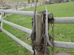 old harness  and hames adorning my fence post