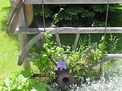 Yard art - horse collar and an old wagon wheel supporting my clematis.