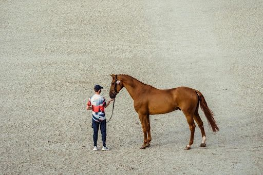 Explosion and Ben Maher (CREDIT: FEI/CHRISTOPHE TANIERE)