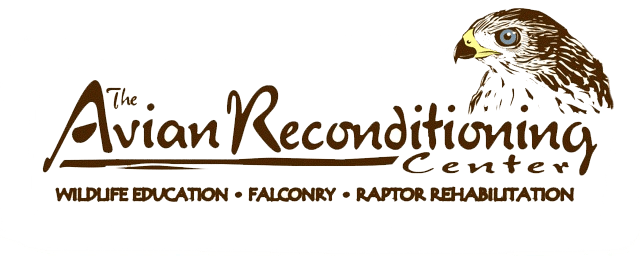 Avian Reconditioning Center
