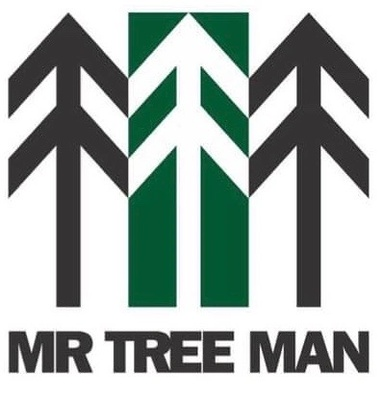 Mr Tree Man