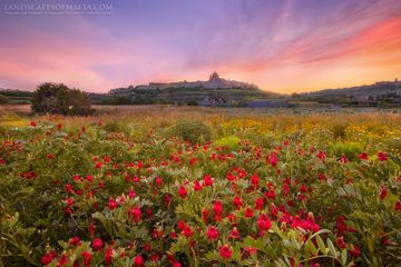 Landscapes of Malta by Derren Vella - Sunset over Mdina malta. Fine art photography by Derren Vella