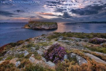 St Paul's island at sunrise - Ill-gzejjer ta san pawl - Malta landscape photography by Derren Vella