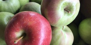 apples, fresh, pick your own