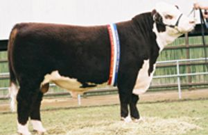 ALLENDALE VAGABOND (A74) - Dalkeith Herefords Cassilis NSW