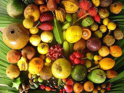 Amazon Rain Forest ( Super ) Fruits