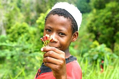 Showing Cloves flowers of the Cloves tree Madagascar - Brazspice Spices International