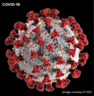 What COVID-19's coronavirus looks like under a microscope.  (Images courtesy of CDC)