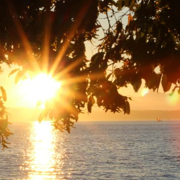 Sunset, Beach through the tree branch and leaves