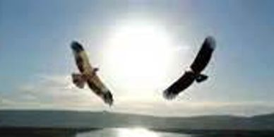 The prophecy of the Eagle and the Condor  ​by: The East Coast NYPDJ​  ​Peace and Dignity Journeys em