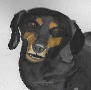 Watercolor of dachshund for a family at church.